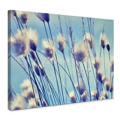 Leinwandbild Delgado - Wind im Gras