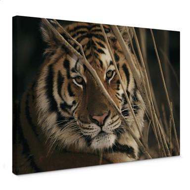 Leinwandbild NG Tiger