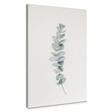 Leinwandbild Sisi & Seb - Eukalyptus: Ein Zweig