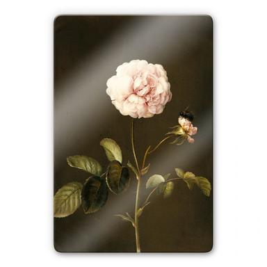Glasbild Dietzsch - Essig-Rose mit Hummel