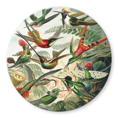 Glasbild Haeckel - Kolibris - Rund