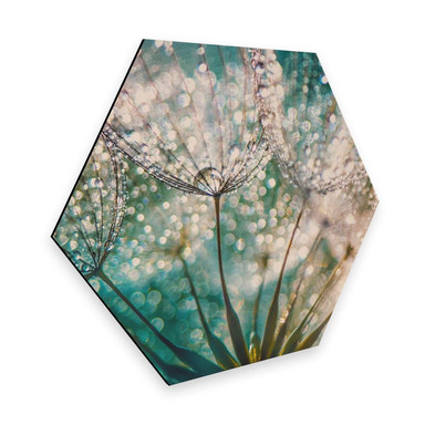 Hexagon - Alu-Dibond Delgado - Funkelnde Pusteblume