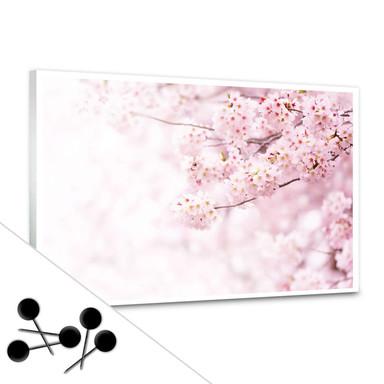 Pinnwand Zarte Kirschblüten inkl. 5 Pinnnadeln