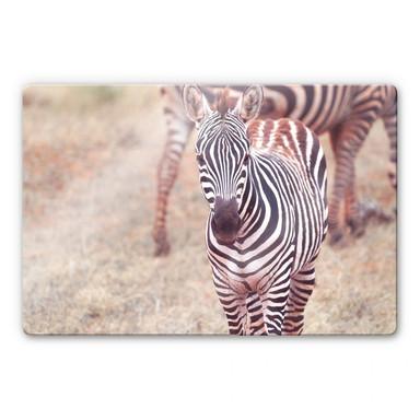 Glasbild Zebra Fohlen