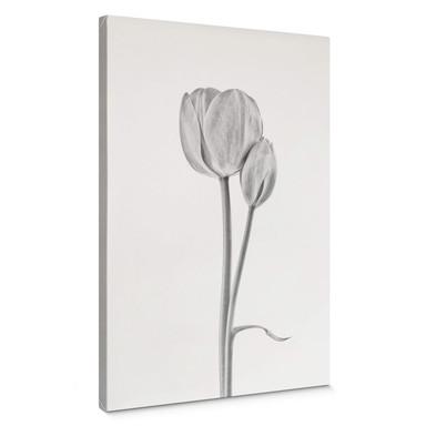 Leinwandbild Grønkjær - Tulpen