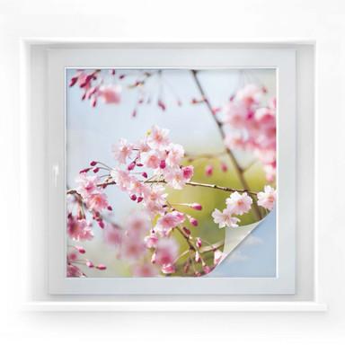 Sichtschutzfolie Cherry Blossoms - quadratisch