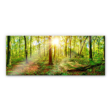 Acrylglasbild - Tief im Wald - Panorama