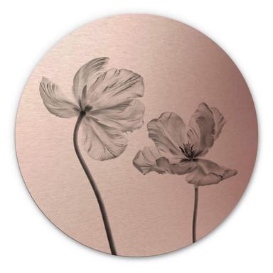 Alu-Dibond Bild mit Kupfereffekt Grønkjær - Tulpenblüte - Rund