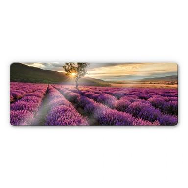 Glasbild Lavendelblüte in der Provence - Panorama 01