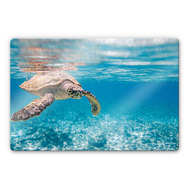 Glasbild Schildkröte auf Reisen