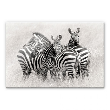 Acrylglasbild Trubitsyn - Zebras in der Savanne