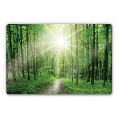 Glasbild Sunny Forest