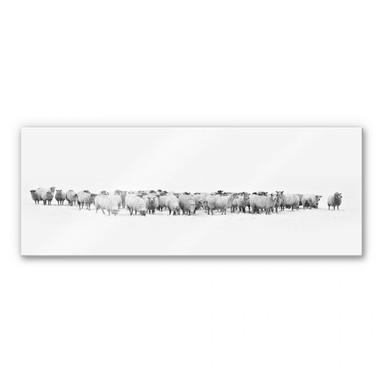 Acrylglasbild Schafherde - Panorama