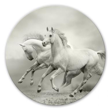 Glasbild Pferde im Galopp - rund