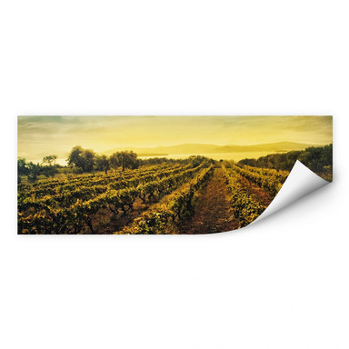 Wallprint Weinreben im Sonnenuntergang - Panorama