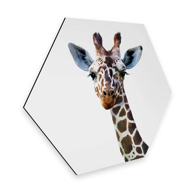 Hexagon - Alu-Dibond Graves - Giraffe