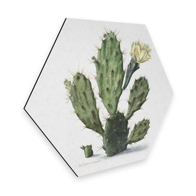 Hexagon - Alu-Dibond Saftleven - Kaktus