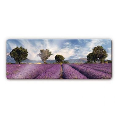 Glasbild Lavendelfeld Panorama