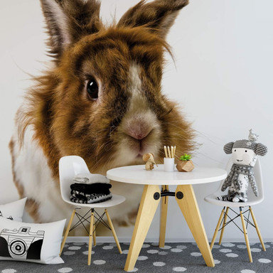 Fototapete Rabbit