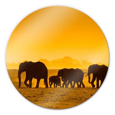 Glasbild Elefantensilhouetten - rund