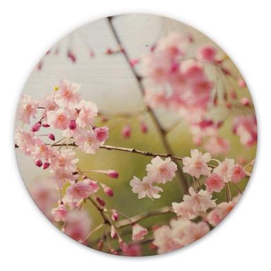 Holzbild Cherry Blossoms - Rund