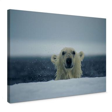 Leinwandbild NG Frecher Eisbär