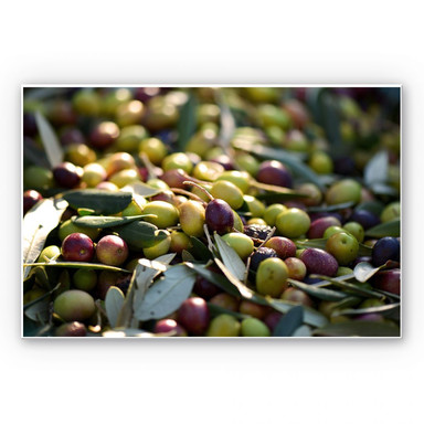 Wandbild Mediterrane Oliven