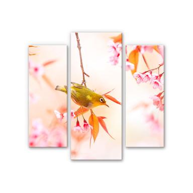 Acrylglasbild Vogelgezwitscher in der Kirschblüte (3-teilig)