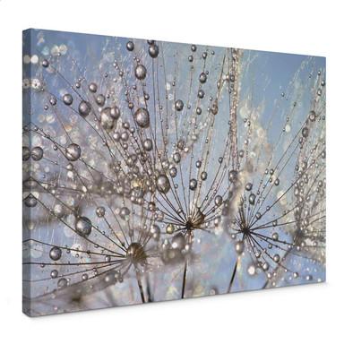 Leinwandbild Delgado - Wassertropfen in der Pusteblume