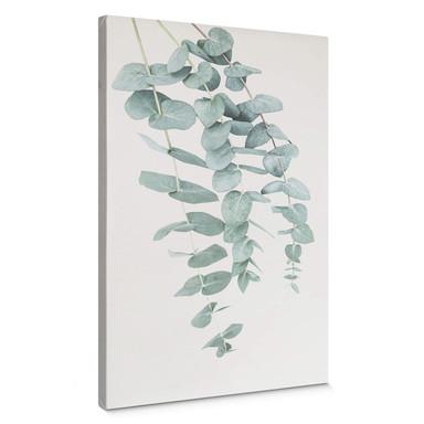 Leinwandbild Sisi & Seb - Eukalyptus: Mehrere Zweige