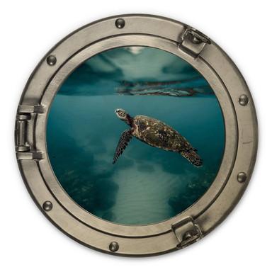 Holzbild 3D-Optik Bullauge - Schildkröte seitlich - Rund