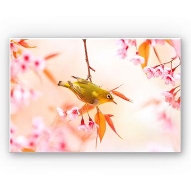 Wandbild Vogelgezwitscher in der Kirschblüte