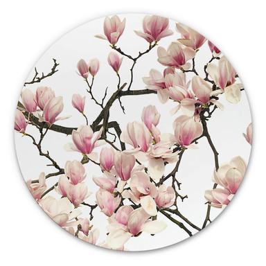 Alu-Dibond Kadam - Flora Magnolia - Rund