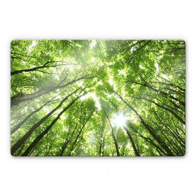 Glasbild Sunny Forest 2