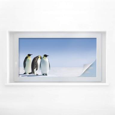 Sichtschutzfolie Penguin - Panorama
