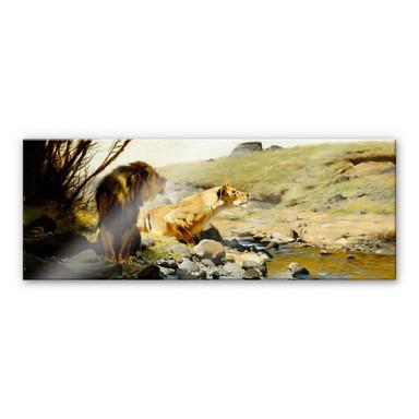 Acrylglasbild Kuhnert - Ein Löwe und eine Löwin an einem Bach