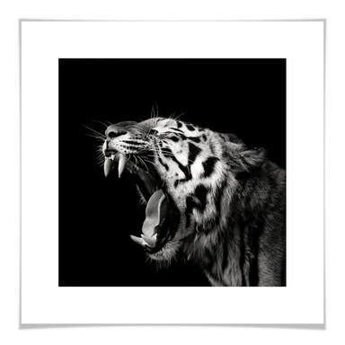 Poster Meermann - Der Tiger - quadratisch