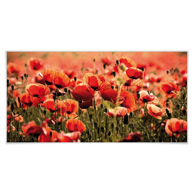 Poster Poppy Field - Panorama