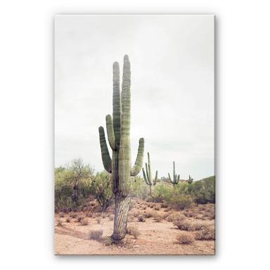 Acrylglasbild Sisi & Seb - Wüstenkaktus