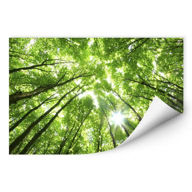 Wallprint Sunny Forest 2
