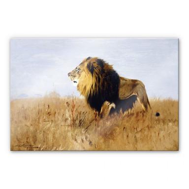 Acrylglasbild Kuhnert - Löwe auf der Suche nach Beute