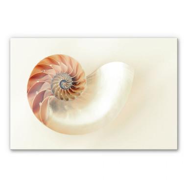Acrylglasbild Nautilus