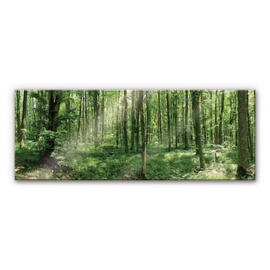 Acrylglasbild Waldpanorama 01