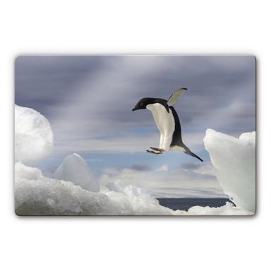 Glasbild NG Pinguin Fly