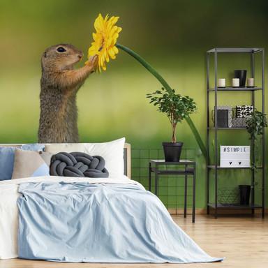 Fototapete van Duijn - Erdhörnchen hält Blume