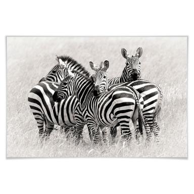 Poster Trubitsyn - Zebras in der Savanne