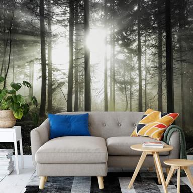 Fototapete - Sonnenstrahlen im Wald Gelb