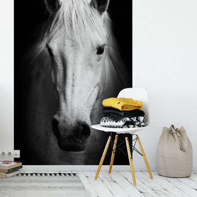 Fototapete White Horse - 144x260cm - Bild 1