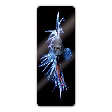 Glasbild Glowfish 2