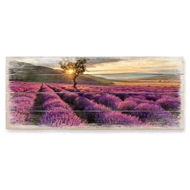 Holzbild Lavendeblüte in der Provence 01 - Panorama
